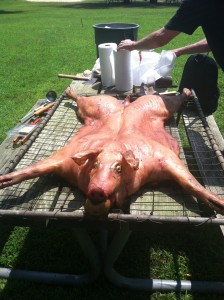 PHOTO 3_PigPickin